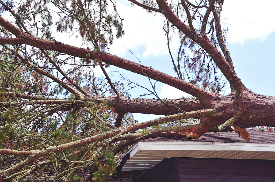 Will your Johnstone Meier home insurance cover a fallen tree?