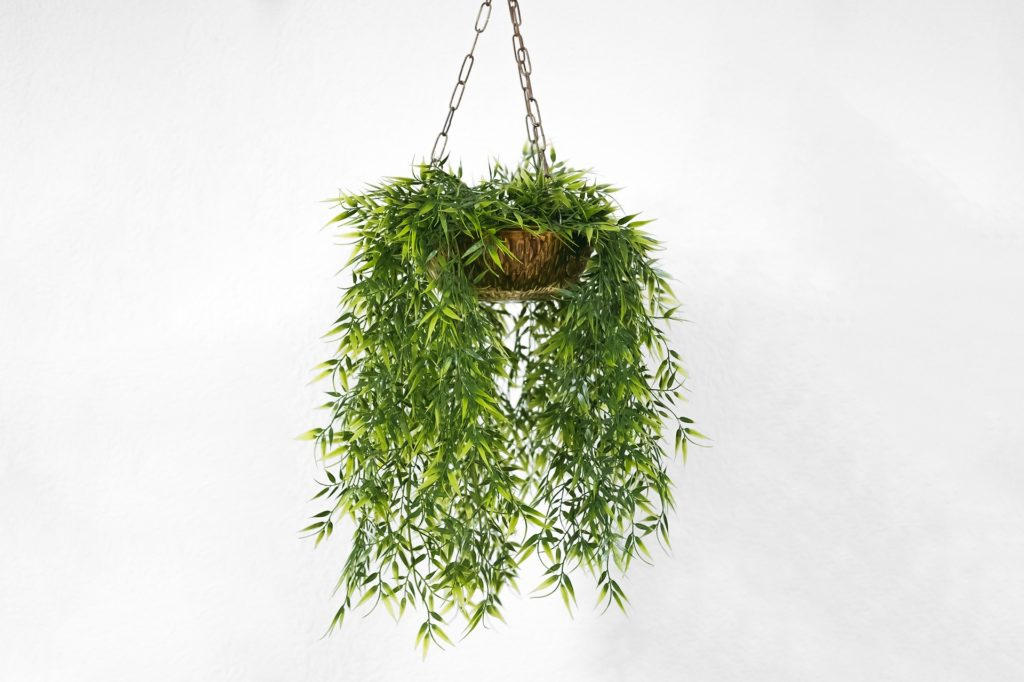 Purify your office with plants